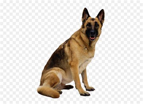german shepherd clip art dog png image picture