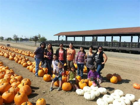 Lathrop Pumpkin Patch Maze by Find Corn Mazes In Lathrop California Dell Osso Family