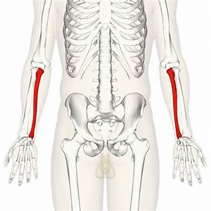 Triceps 101  An Anatomical Guide To Training   Fitness