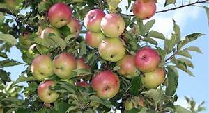 City Fruit Harvested Almost 14 Tons Of Unused Fruit From