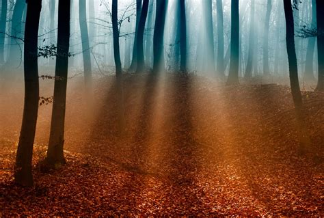 manana de otono en el bosque descarga fondos gratis hd