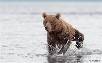 Bear Run Animated Gifs Bears Funny Beer