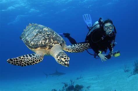 How To Scuba Dive - scuba diving stuart coves bahamas dive shop tours