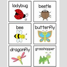 Insect Word Wall Vocabulary  April  Insect Activities, Insects, Bugs, Insects