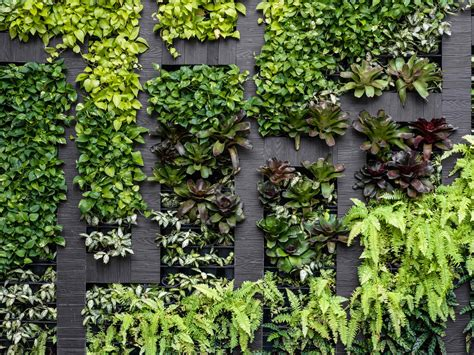 Vertical Garden by How To Build A Vertical Garden At Home Realestate Au