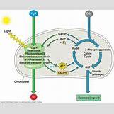 Adp Molecule Labeled | 330 x 270 jpeg 15kB