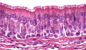 "Lab Week 3: ""Epithelium"" at Trident Technical College ..."