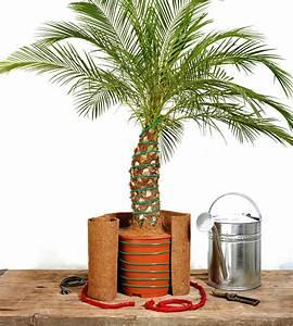 palmen uberwintern garten rasenpflege selbstde With französischer balkon mit garten palme winterfest