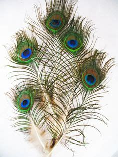 peacock feather christmas trees for sale 28 best cardinal dove tree decorations images in 2018 tree