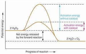 Download Reverse Activation Energy Diagram Free Software
