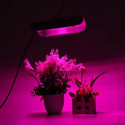 Plant Greenhouse Hydroponics 220v Spectrum Gardening Growing