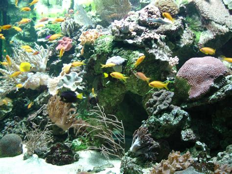 file aquarium tropical bac marin jpg wikimedia commons
