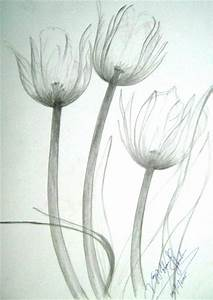 Pencil Sketched Tulips by kazicreations on DeviantArt