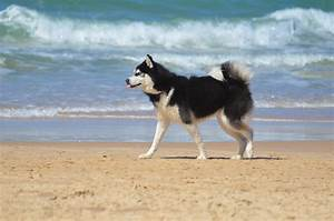 Urlaub Mit Hund Am Meer Italien : campingurlaub mit hund am meer genie en sie einen ~ Kayakingforconservation.com Haus und Dekorationen