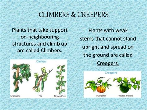 Getting To Know Plants