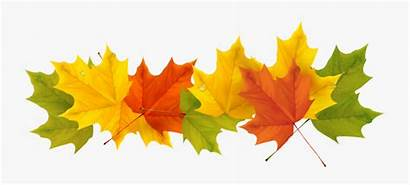 Leaves Border Clipart Fall Clear Transparent Clipartkey