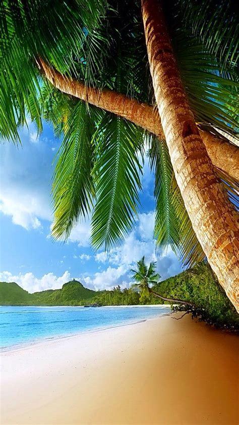 iphone wallpaper background tropical tropics paradise