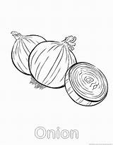 Onion Coloring Pages Comments sketch template