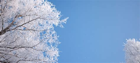 winter cover fresh clean winter trees by maggiekuo fast online image
