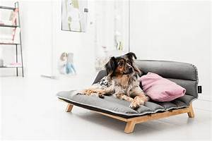 category puppy With dog bed that looks like a bed