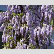 Perennial Plant Quizzes From Education Quizzes