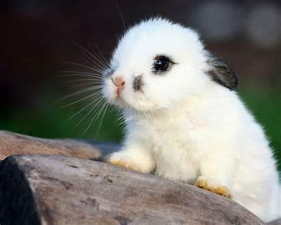 Bunnies Wallpapers Forest Rabbit Desktop Mobile