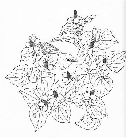 Nature Coloring Pages Adult Adults Tree Pg