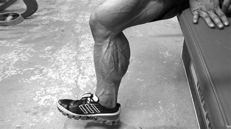 The human leg, in the general word sense, is the entire lower limb of the human body, including the foot, thigh and even the hip or gluteal region. Tip: Build Your Calves With This Superset   T Nation