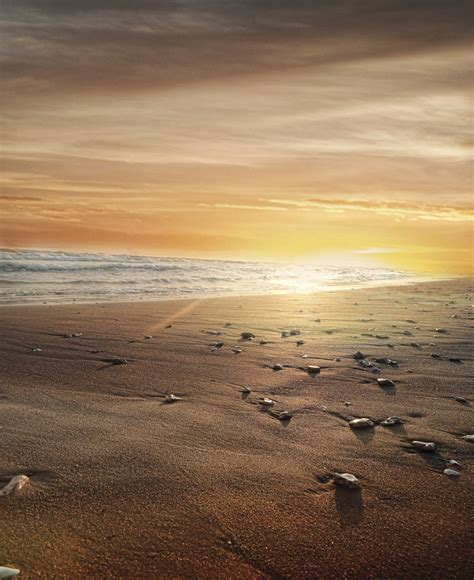 beach sunset premade background  kalosysart  deviantart
