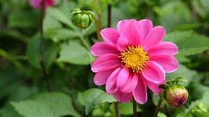 free photo beautiful flower beautiful bloom