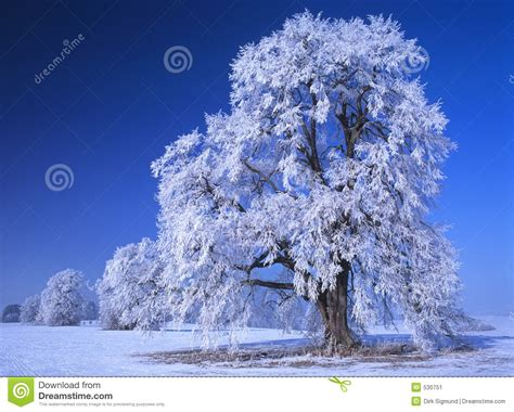 perfect winter day  stock image image  bright