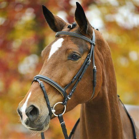 horse bridles bridle star tack dressage riding flash reins rider complete