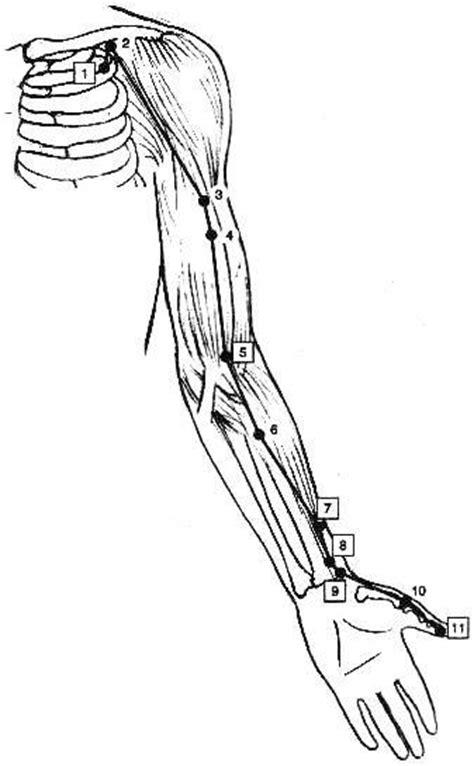 meridien du poumon acupuncture m 233 ridien des poumons 171 acupuncture 171 articles 171 matemius