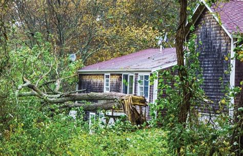 Storm Damage Control For Plants-the