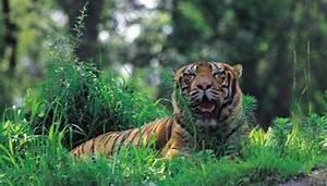 List of Facts About Kingdom Animalia | Animals - mom.me