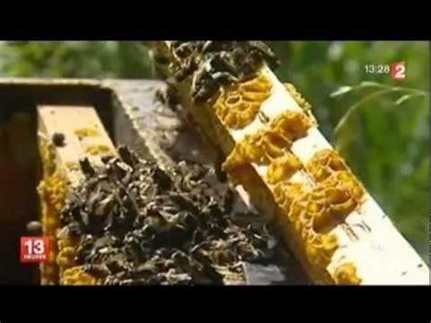 foto de Maladie de l'abeille par des larves de mouches YouTube