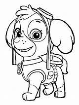 Paw Patrol Coloring Skye Canina Patrulha Zuma Colorir Desenhos Colorare Disegni Ausmalbilder Imprimir Puppy Colouring Printable Zum Sky Coloriage Patrulla sketch template
