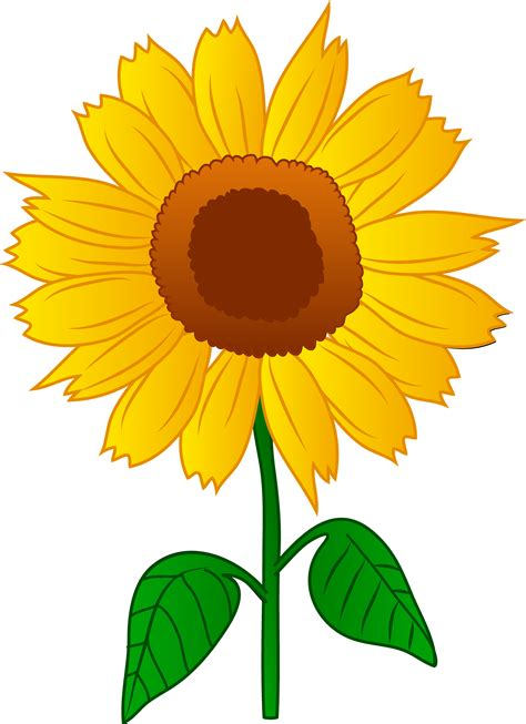 free clipart clipart sunflower pencil and in color