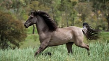 10 of the Rarest Horse Breeds in the World   HenSpark