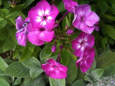flower colors the helpful art teacher a garden of flowers blending colors using oil pastels