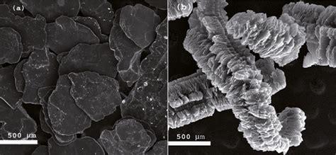sem micrographs   expandable  expanded graphite  scientific diagram