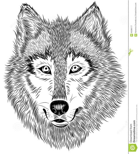 black  white portrait  furry wolf stock vector
