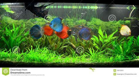 r 233 servoir de poissons exotique aquarium amazonien image stock image 18313031