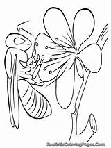 Coloring Pages Insect Realistic Insects Bee Peacock Body Bug Printable Parts Bugs Clipartpanda Template Children Clipart Getcoloringpages Panda Terms Templates sketch template