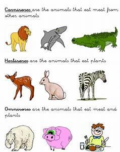 Omnivore Animals Clipart