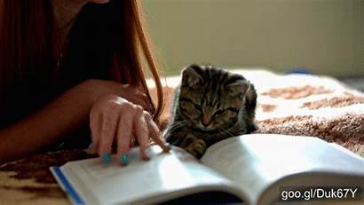 Reading Cat Playing Funny Cats Books Person