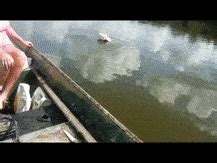 River Monsters Gifs Search  Find, Make & Share Gfycat Gifs