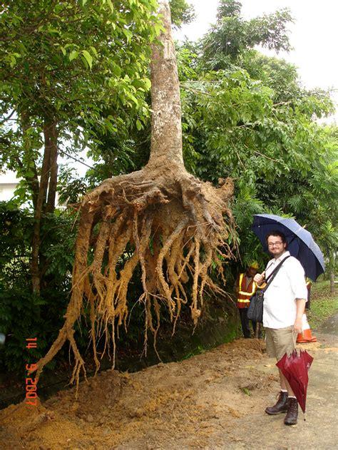deep  tree roots  grow deeproot blog