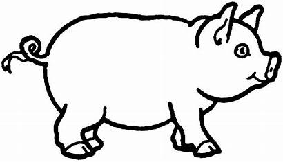 Pig Coloring Drawing Draw Pigs Pages Animals
