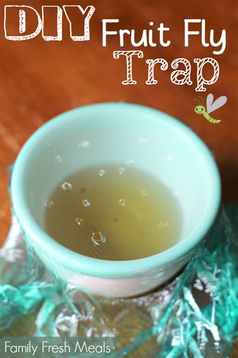 diy easy fruit fly trap family fresh meals